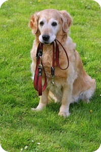 toronto dog walker